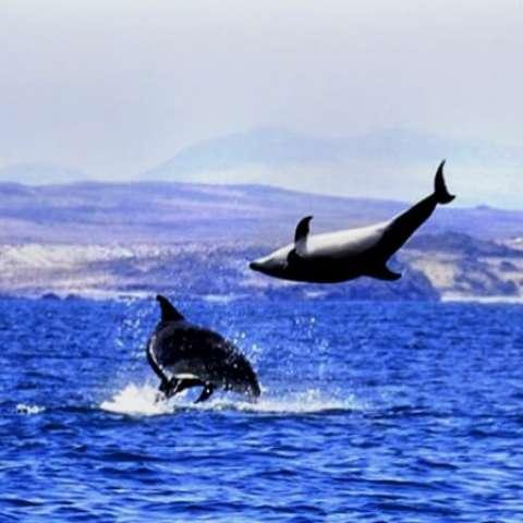 دانلود آهنگ دلفین سیاه به نام دلفین سیاه